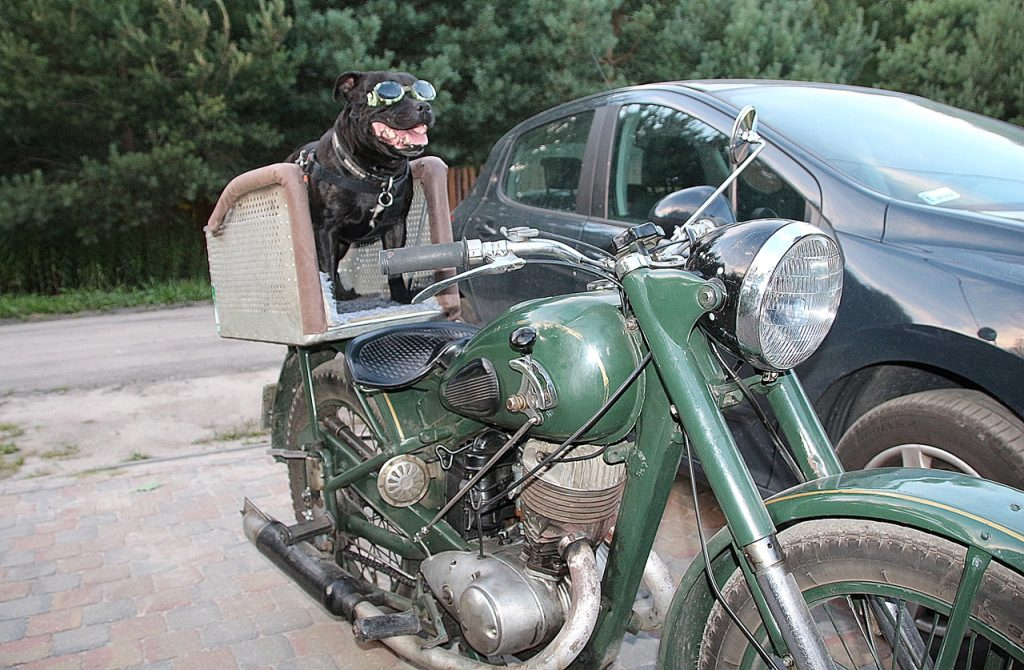 staffik Rufus na motorze