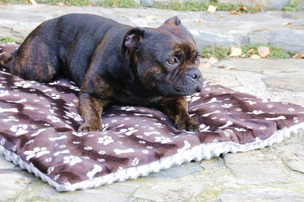jesień_mama sowa posłanie dla psa